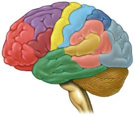 what color is a brain brain color