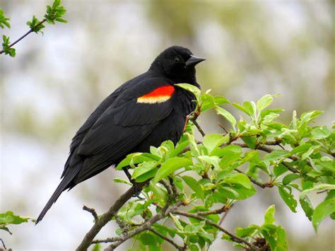 5 4 15 spring bird season worstbirdpics farming the