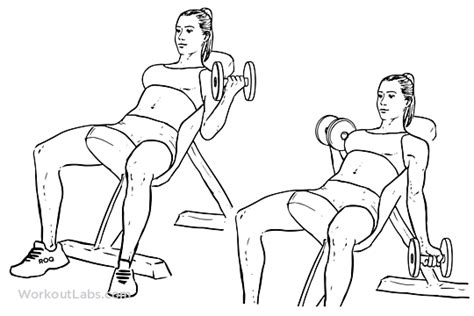 seated barbell curl on decline bench seated alternating incline bench dumbbell curls