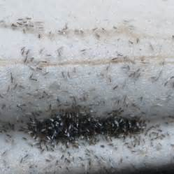 tiny ants in bedroom tiny white bugs in bedroom house design and decorating ideas