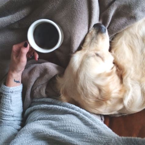 dogs and coffee and a cup of coffee 2 best things dogs