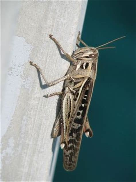 how to get rid of crickets in house the o jays cricket and how to get rid on pinterest