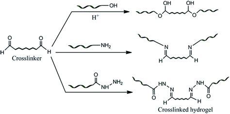 Vinyl Modified Mba by Modified Biopolymer Dextrin Based Crosslinked Hydrogels