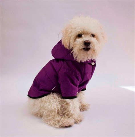 imagenes de invierno con animales vestuario para mascotas tu perro a la moda mundo mascotas