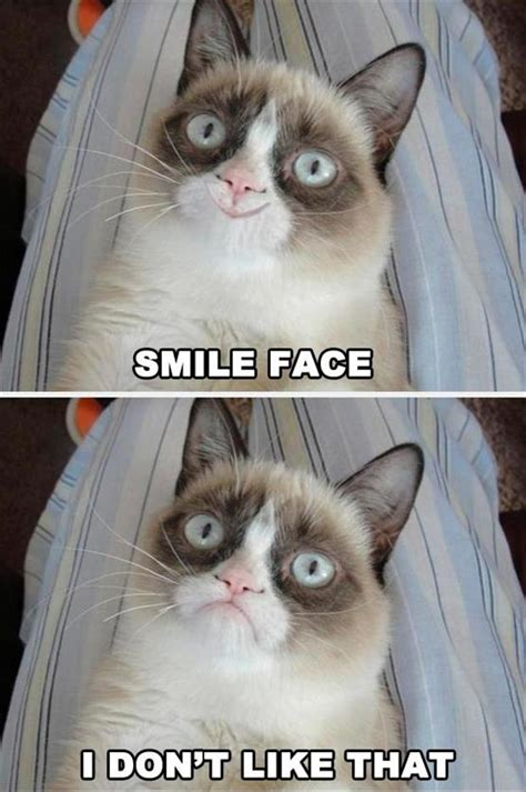 Grumpy Face Meme - the best of grumpy cat 70 pics