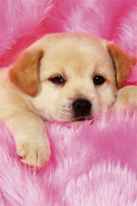 really dogs and puppies 40 best ideas about really puppies on really puppies pets and