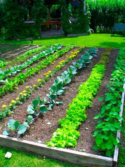 Perfect Backyard Vegetable Garden Design Plans Ideas Vegetable Garden