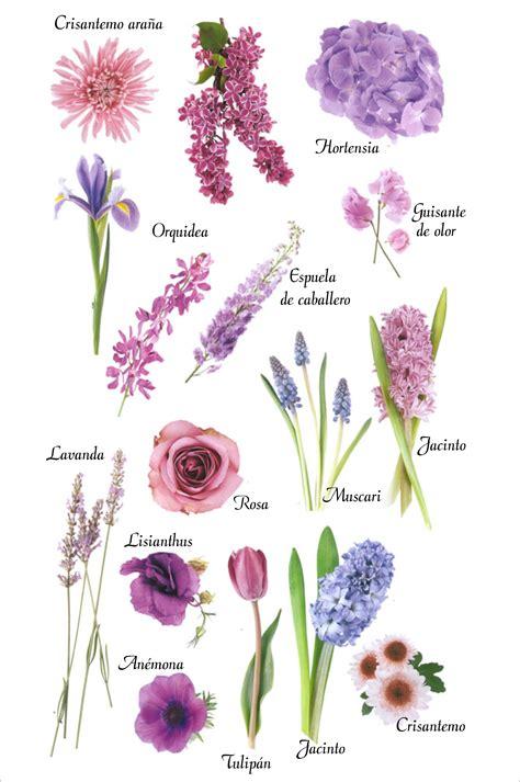 imagenes flores y nombres nombre de flores flores pinterest