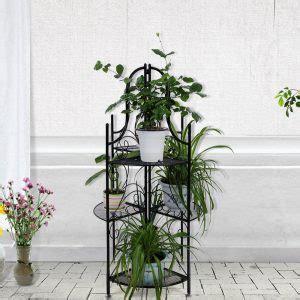 piante da terrazzo invernali 10 piante da balcone sempreverdi