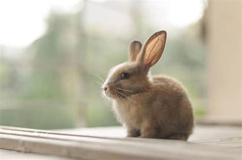 best indoor rabbit cages all pet cages
