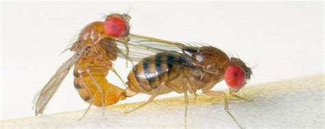 fruit flies to fleas and fruit flies what message you got