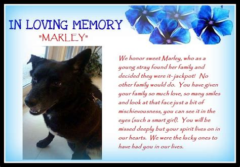 Animal Rescue Tribute by A Tribute To Marley Saving Pets One At A Time Animal