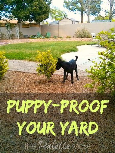 puppy proofing backyard home the o jays and puppys on pinterest