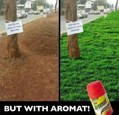 Turf Meme - mmeskia hii kidero grass wins prestigious award after