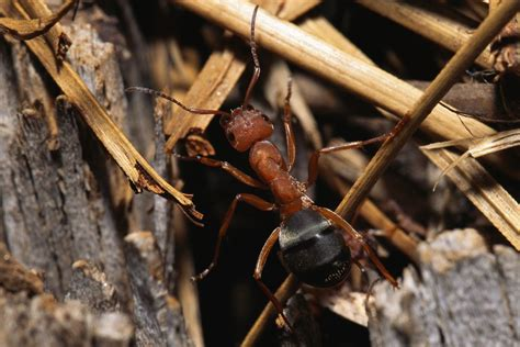carpenter ants in bathroom 4 sure fire steps to eliminate prevent carpenter ants