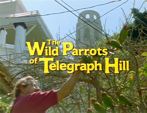Parrots Of Telegraph Hill the parrots of telegraph hill documentary 2003