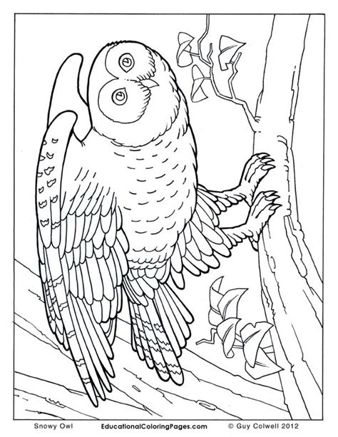 realistic person coloring page realistic coloring pages bestofcoloring com