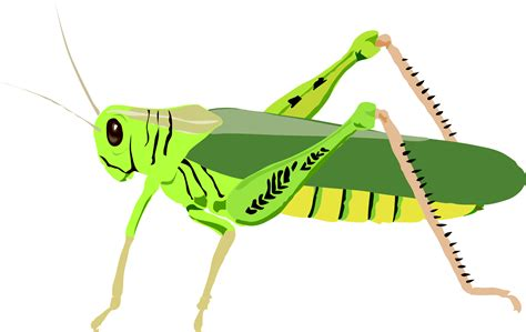 free clipart grasshopper clipart images free clipartpost