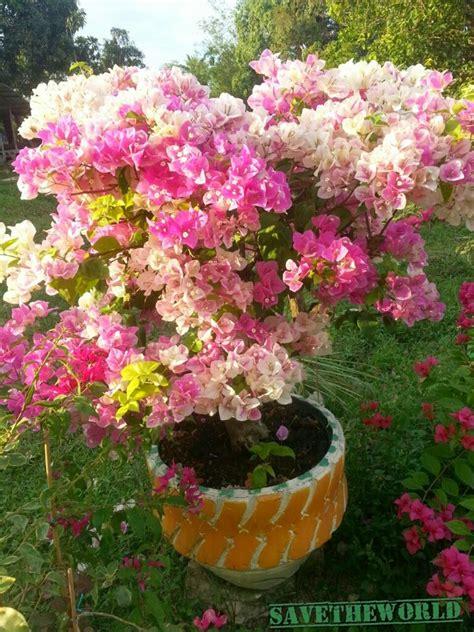 bunga kertas cantuman pelbagai warna amscom