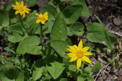 arnica after c section oregon hikers view topic north section line trail 05 20 17