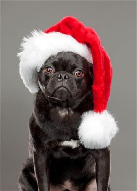 pug merry the world s catalog of ideas