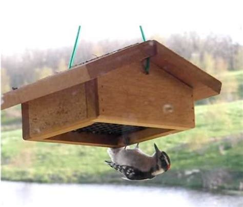 starling proof suet feeder how to keep starlings away