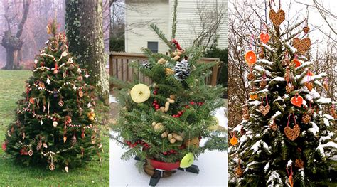 how to decorate an outside christmas tree decorate an outdoor tree for animals dot