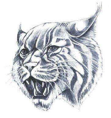 kentucky wildcats tattoo designs wildcat drawing wildcat pride kentucky and