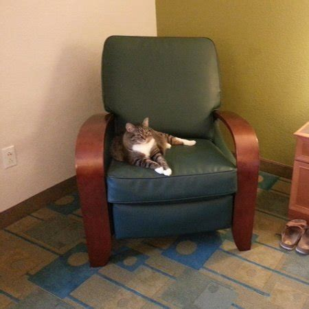 comfy recliner chair pet friendly of course picture of