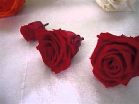fiori stabilizzati procedimento fiori e fogliame stabilizzati
