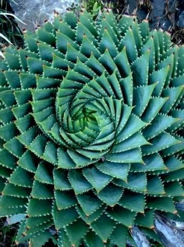 observed pattern in nature 30 best sacred geometry images on pinterest sacred