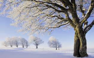 Winter Tree by Beautiful Snow Hd Wallpaper 8 Landscape Wallpapers
