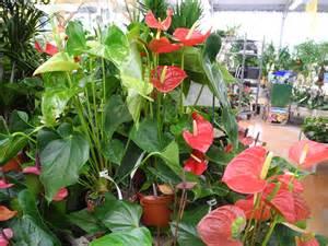 pr 233 sentez vos plantes d int 233 rieur ou d 233 polluantes