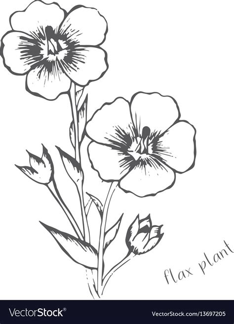 flax color flax flowers are painted in one color vector image
