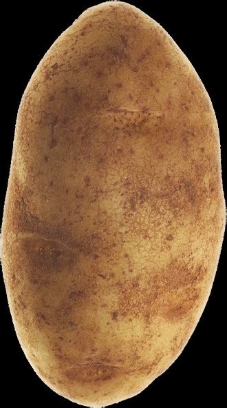 Potato Means by The Meaning And Symbolism Of The Word 171 Potato 187