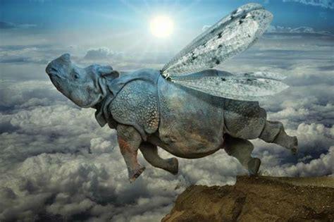rinoceronte volante rinoceronti volanti e scheletri in fuga ecco la realt 224