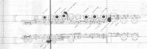 how to hold a flute diagram flute