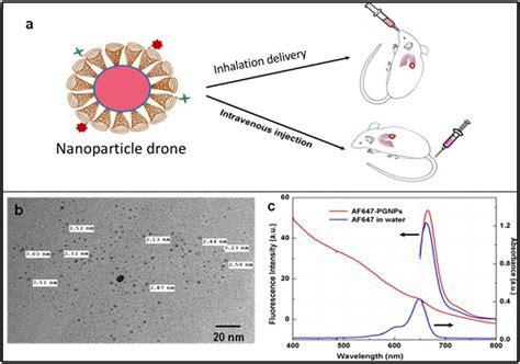 Drone Lung frontiers nanoparticle drones to target lung cancer with radiosensitizers and cannabinoids