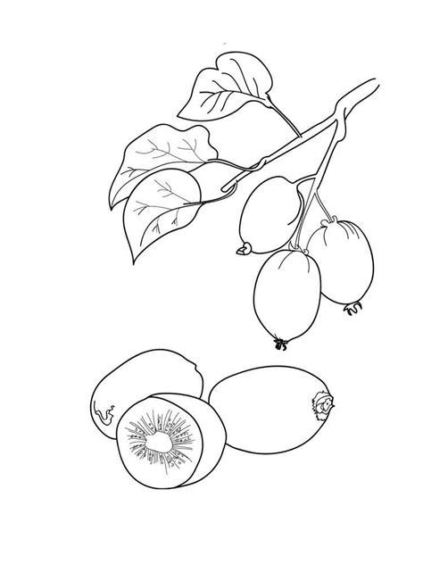 kiwi fruit coloring pages   print kiwi fruit