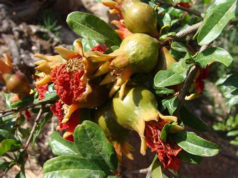 exles of fruit trees does fruit on fruit trees need to be thinned gardening