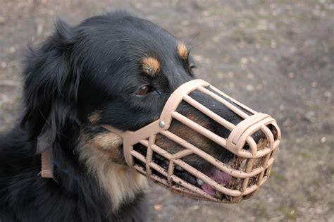 legge sull ingresso dei cani nei luoghi pubblici senso civico ladispoli quot cani nei luoghi pubblici le