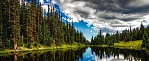imagenes impresionantes de galicia los bosques m 225 s impresionantes del mundo caldaria