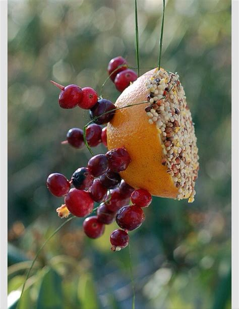 diy fresh fruit bird feeder trusper