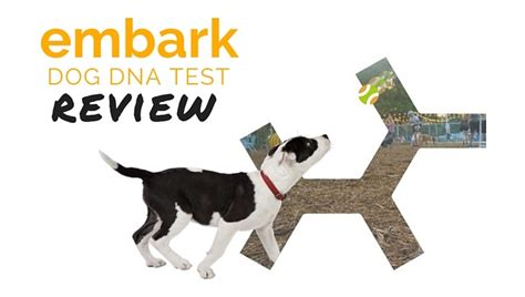 dna test petco embark dna test review 2018 is embark worth the money