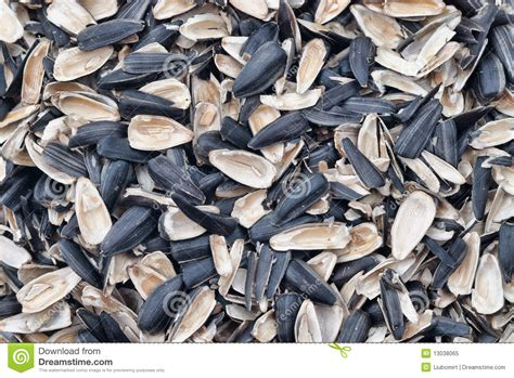 sunflower empty seed shells royalty free stock photo