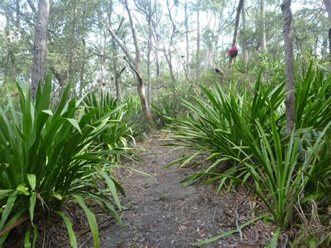 Growing gymea lilies gardening with angus