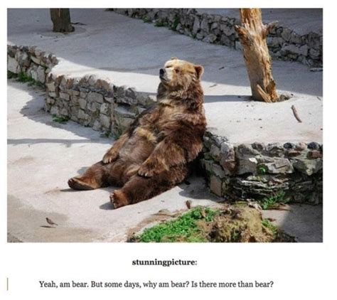 Most Hilarious Animals by The Funniest And Most Outrageous Posts About Animals In