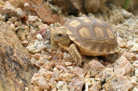 Stork On Tortoise Snake D1816bzgs pets tortoise