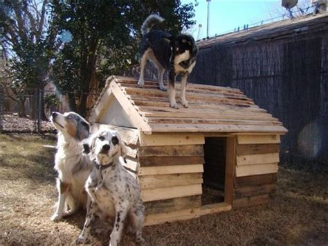 diy outdoor dog house diy pallet outdoor dog house pallets designs