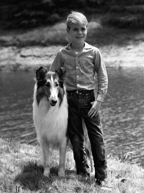 what type of was lassie file jon provost lassie 1961 jpg wikimedia commons